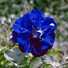 Blue flower by pablohon3y
