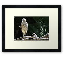 Green Heron? Framed Print