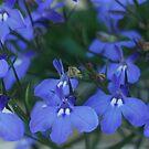 blue flowers by JenniferJW