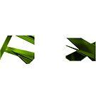 Segmentation (GREEN) by LoyaltyDivision