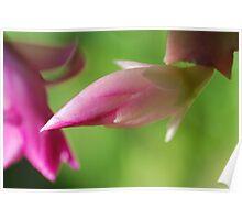 """""""Zygo Cactus Flowers"""" Poster"""