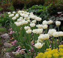 Tulip Edge by EileenFrith