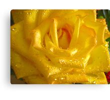 *THE YELLOW ROSE* Canvas Print