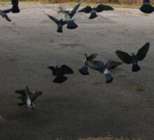 Pigeons Flight in Montreal Suburb. Sticker