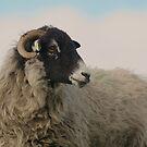 Ram by Franco De Luca Calce