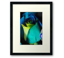 Rainbow Roses 8 Framed Print