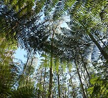 Tree fern in the Forest by solena432