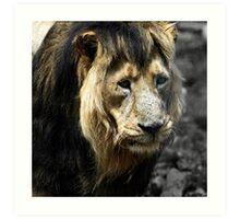 Ashok the Asiatic Lion Art Print