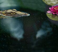Smell the Flowers by Michael Wolf