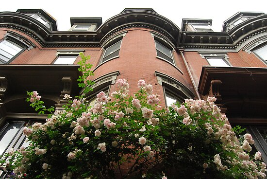 Brownstones in Bloom by MMPhotography