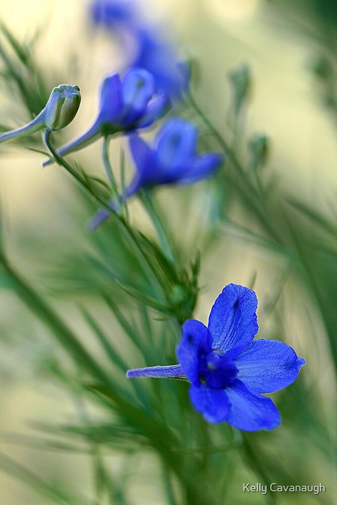 Blue  by Kelly Cavanaugh