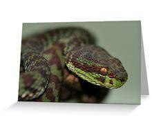 KANBURIAN PIT VIPER Greeting Card