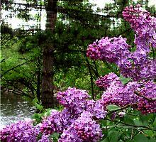 The Secret Lilacs by godmommy5