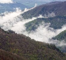 Mountains covered with forests by vkph