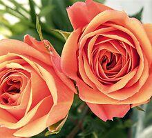 Vintage Roses by Stephanie Stonato