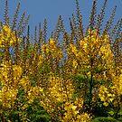 Full Yellowish Summer by Nira Dabush