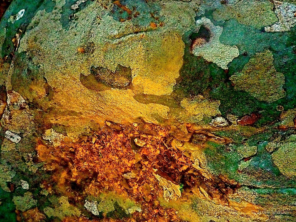 Strange Autumn Rose by Julie Marks