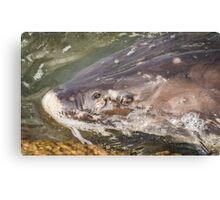 Looking Into The Eye Of The Sturgeon Canvas Print