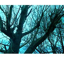 Clear Blue Sky Photographic Print