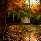 Autumn leaves surround the boathouse at Alfred Nicholas Gardens by Elana Bailey