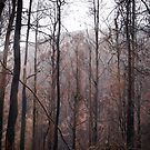 Winter after fire by Pirostitch