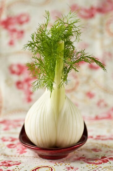 Fennel bulb by Ilva Beretta