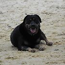 Rotti in the sand by miroslava