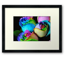 Rainbow Roses 9 Framed Print