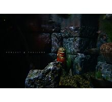 Lion in the water! Photographic Print