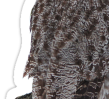Magnificent Great Grey Owl Sticker