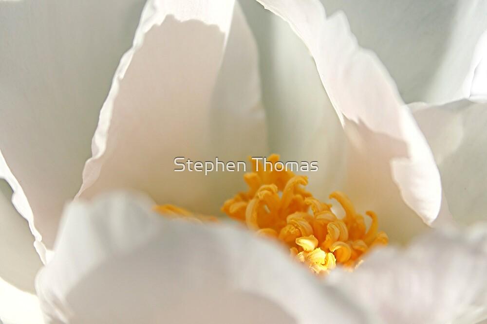 White Sack of Gold by Stephen Thomas