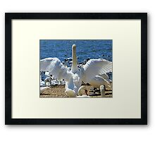 The Attention Seeker! Framed Print