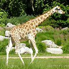 small baby giraffe by KERES Jasminka