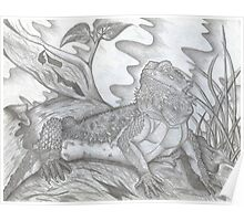 Bearded Dragon Pencil Sketch  Poster