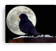 I need to find somewhere to roost. Canvas Print