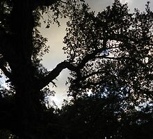 A Tree By Twilight by FloraMoura