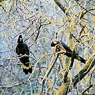 Black Cockatoos,S.A. by elphonline