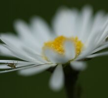Getting close to Daisy.... by JohnBuchanan
