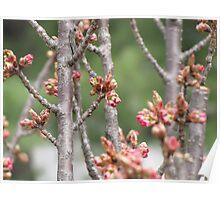 Spring Buddings III Poster
