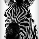 Zebra by Gregory Colvin