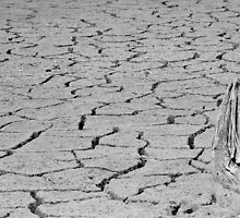 Parched Earth by EmmaLeigh