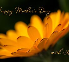 Calendula aglow - Mother's Day by Celeste Mookherjee