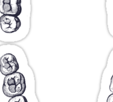 Teeth Sticker