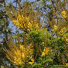 Golden Indian Embrodary touches the soft Blue Sky by Nira Dabush