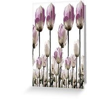Tulip flowers Greeting Card