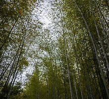 Bamboo Grove by Michelle McConnell