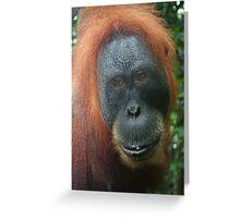 Mother Orangutan Greeting Card