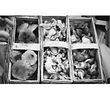 fungii Photographic Print