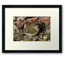 Willow or Wood Warblers  Framed Print