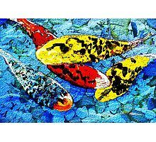 Four Koi in Abstract Photographic Print
